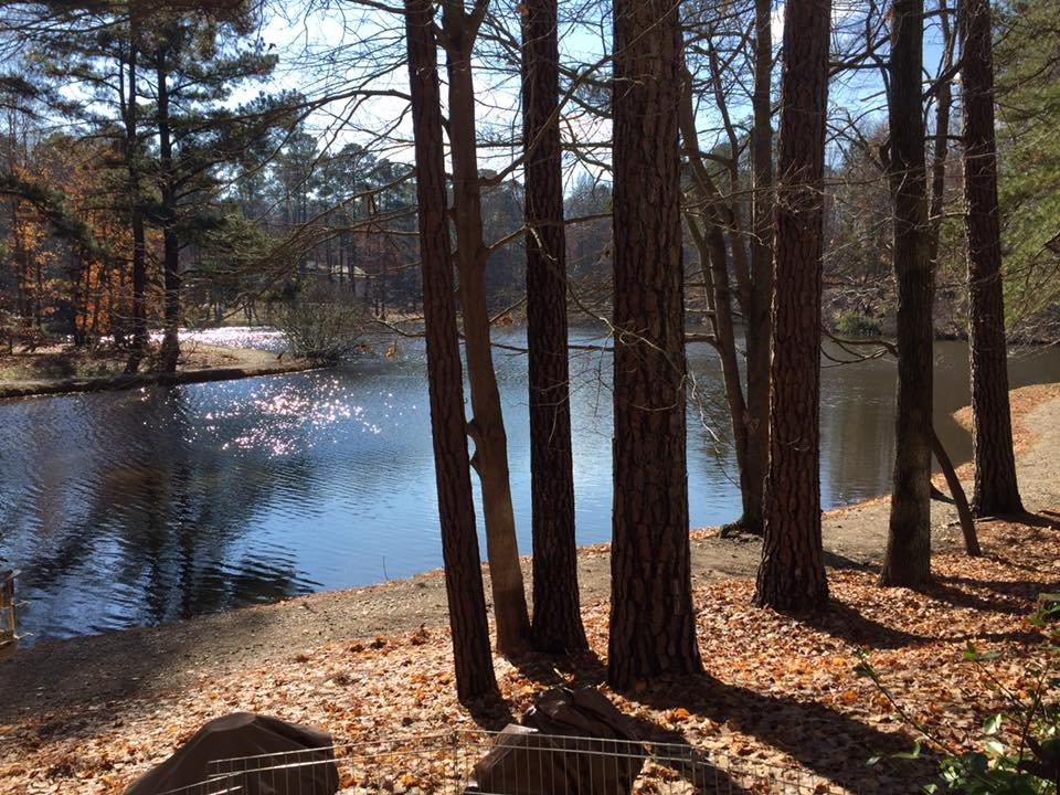 Cary, NC by the lake.jpg