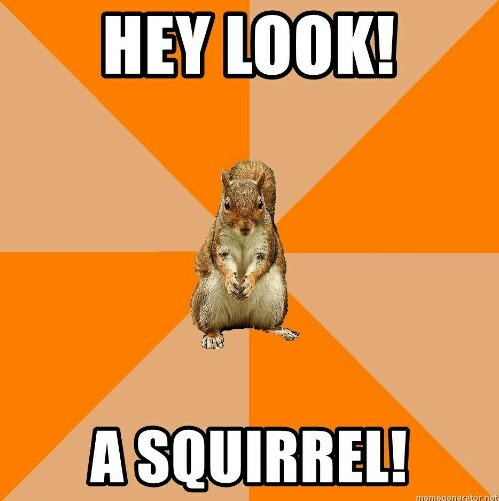 hey-look-a-squirrel-memegenerator-net-hey-look-a-squirrel-49348380.jpg